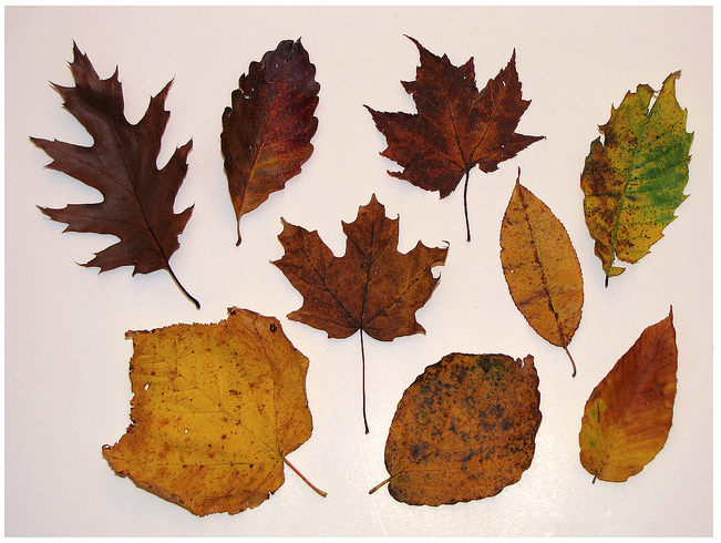 Literacy With Leaves: Activities To Accompany 'Leaf Man