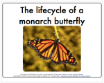 lifecycle_butterfly_thumb