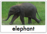 thirsty elephant vocab cards thumb